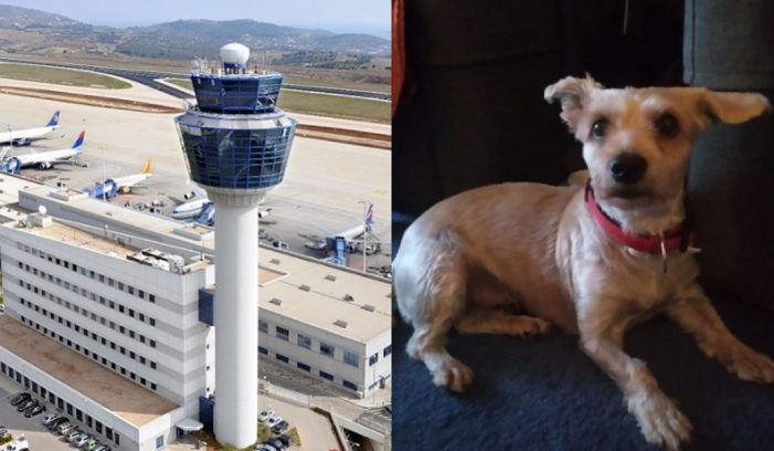 Dog Lost at Athens Airport Desperately Seeks Owner